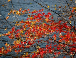 Red leaves against water for WoW