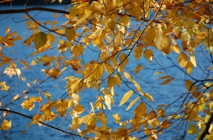 Yellow leaves for WoW